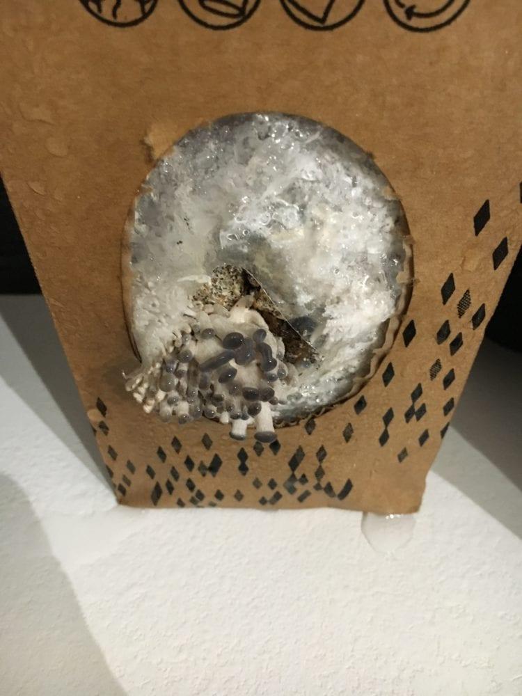 Boite-à-champignons_1208-750x1000 Test de la Boîte à Champignons : écologique et solidaire